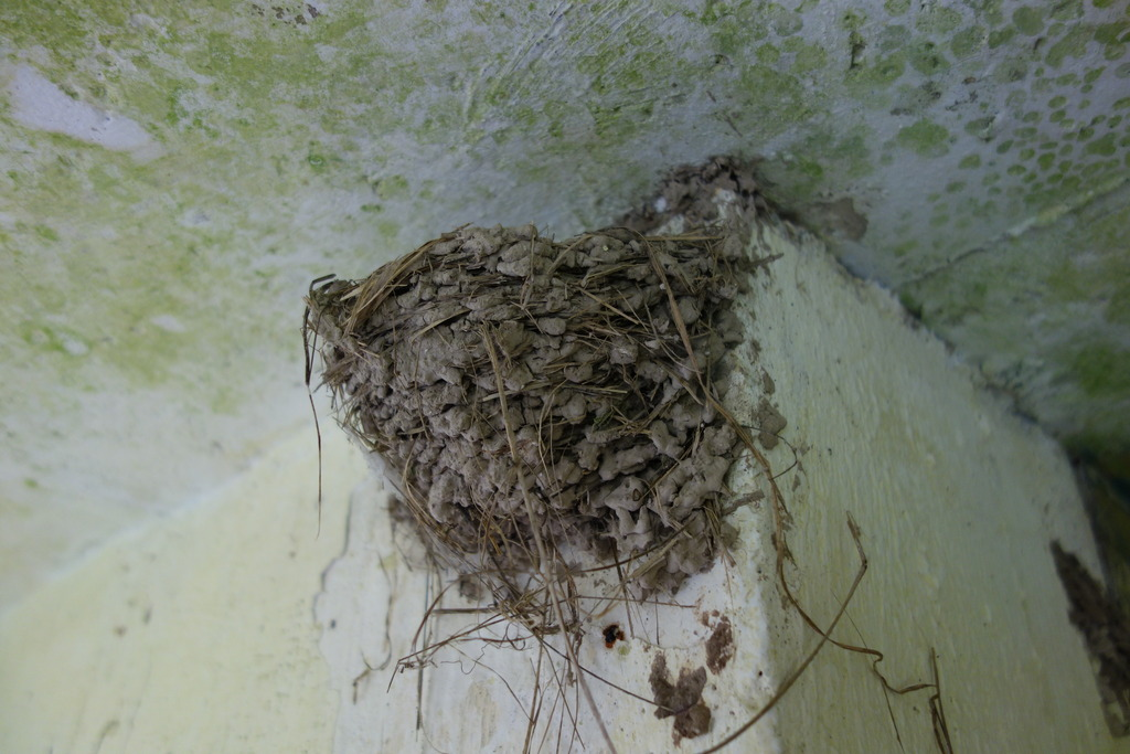 28%20-%20Observation%20Post%2011%20Swallows%20Nest_zpsvmcqe7jc.jpg