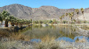 Zzyzx-Road-and-Mineral-Springs-07.jpg